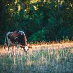 agriturismo con fattoria a spoleto